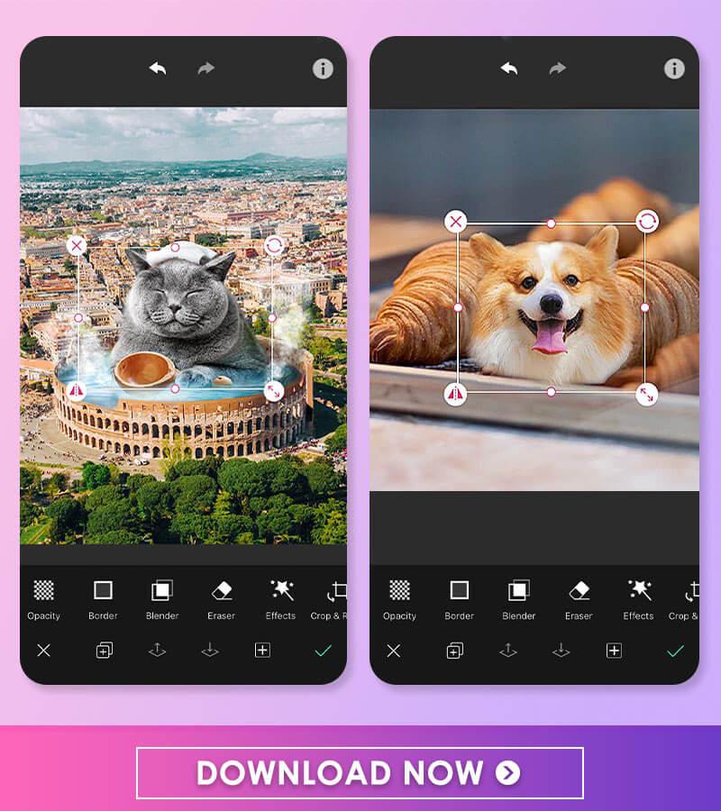 Best Pet Photo Editing Idea